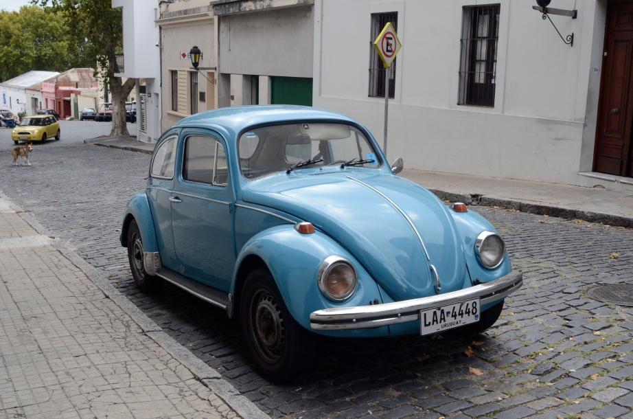 Blue bug..